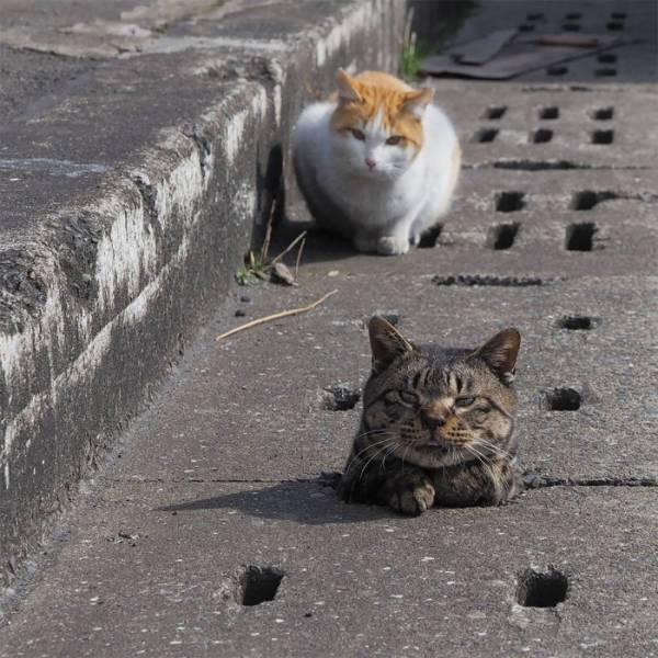 Theo lẽ thường, những con mèo sống lang thang, cơ nhỡ sẽ cô đơn, buồn bã và yếu gầy.