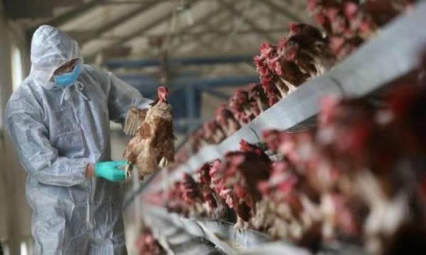 Dịch cúm H5N1 quay lại Trung Quốc vào năm 2020. Ảnh: Getty.